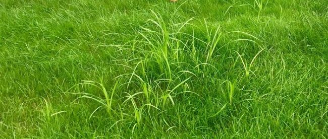 Blog: How To Get Rid of Grassy Weeds in Canada [Tips That Actually Work]