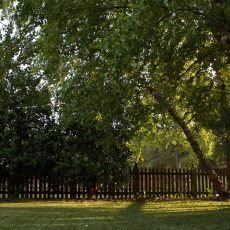 Tree in Backyard — Deep Root Fertilizer | Yard Dawgs Lawn Care