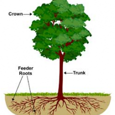 Tree and Shrub Deep Root Fertilizer | Yard Dawgs Lawn Care