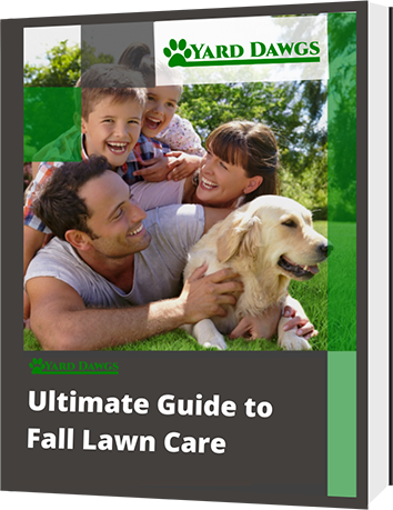 Ultimate Guide to Fall Lawn care