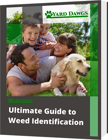 Ultimate Guide to Weed Identification