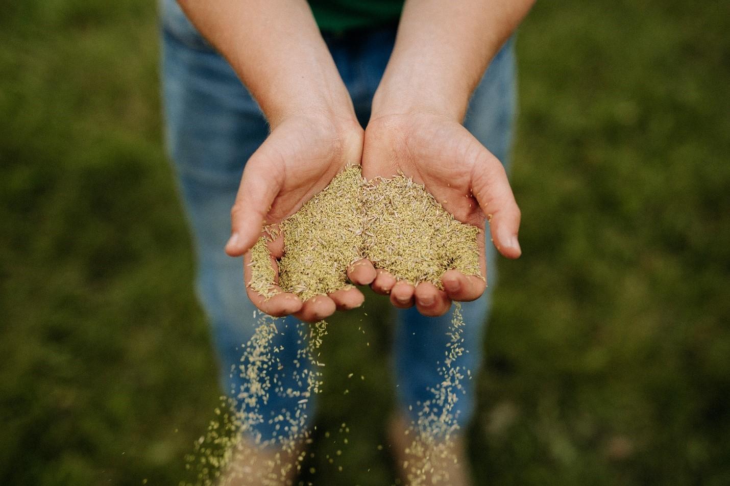 yd-seeding